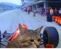 Pasauli aizkustina video, kurā skaistulis kaķis kā Formula-1 pilots milzu ātrumā izbrauc trasi